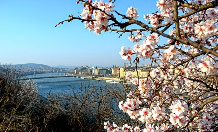 Spring view of Danube