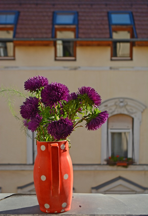 Chrysanthemum time