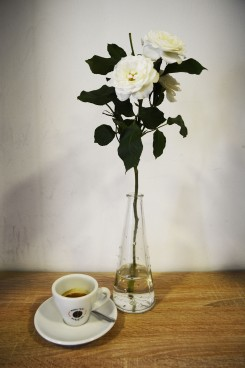 White roses in Budapest Baristas