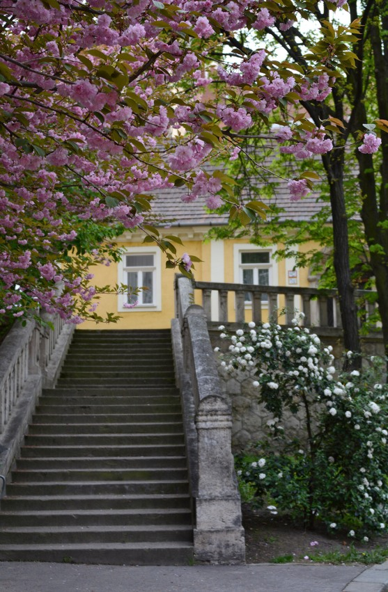 Stairway to spring