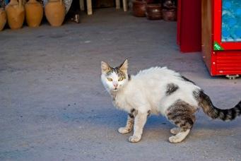 Cappadocian cat