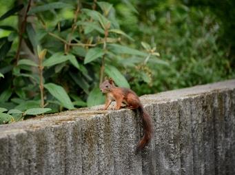 Squirrel baby in Népliget