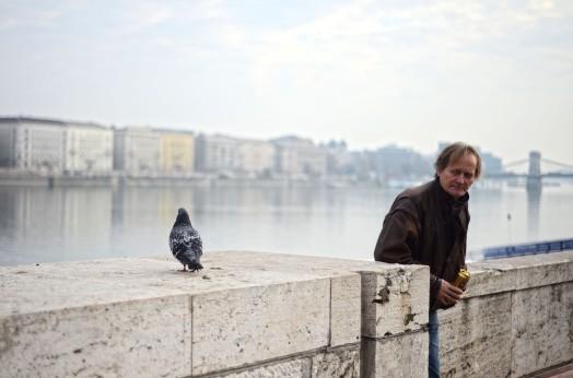 Danube pigeon is perhaps judging you