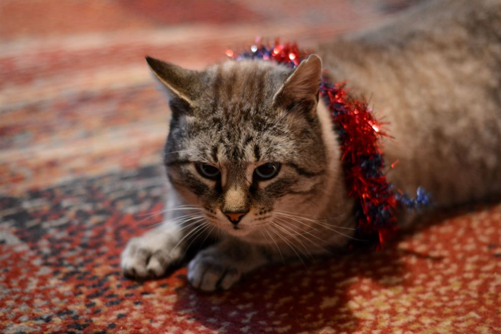 Tinsel might not have been the best idea