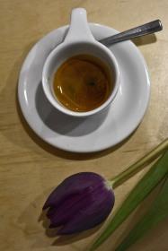 Purple Tulip/My Little Melbourne