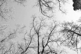 Halmi erdő