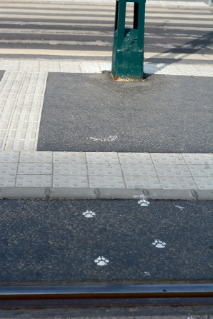 The two tailed dog was here