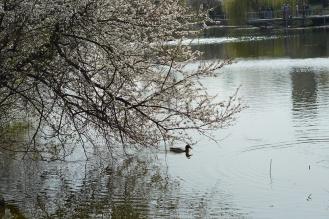 Lake Feneketlen
