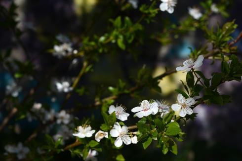 Spring on Gellért hill
