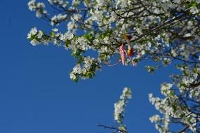 Martenitsa on blooming tree
