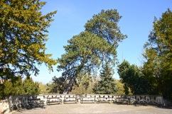 Royal Palace, Gödöllő