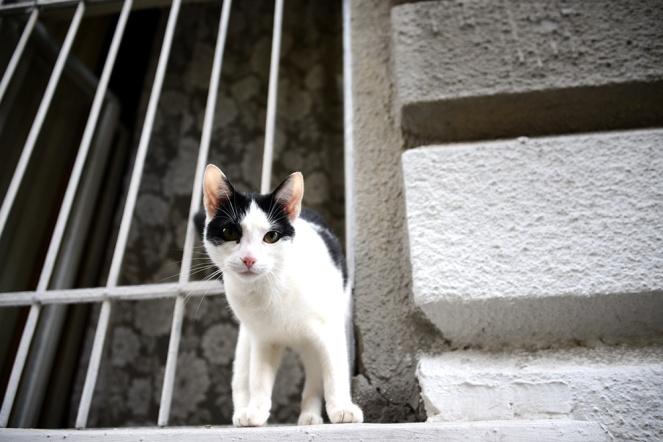 Terézvaros cat is watching you p.2