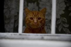 Terézvaros cat is watching you p.1