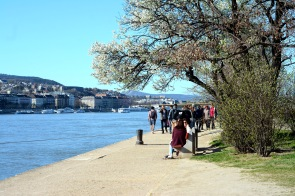 Spring by the blue Danube