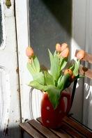 Gratuitous tulips on my balcony