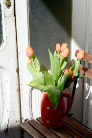 Gratuitous tulips on my balcony