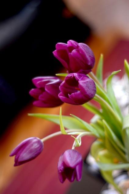 Gratuitous tulips- home edition