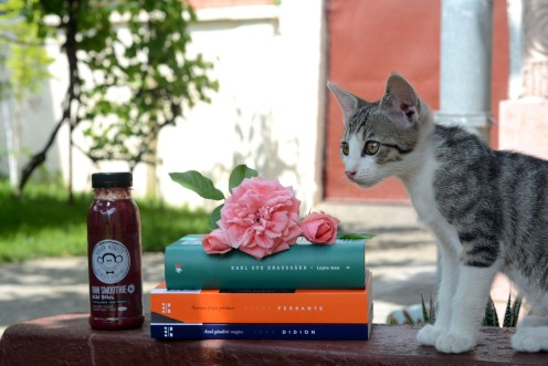Well read cat