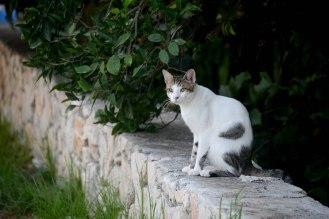 Cat Farm gang member