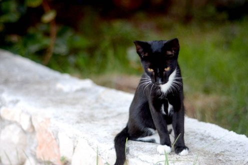 A young member of the Cat Farm