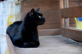 Enigma cat slightly alert