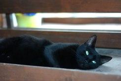 Enigma cat