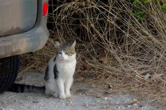 Sunrise cat