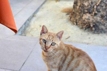 Athena cat