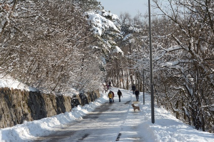 Winter at Normafa- more dog orienteering action