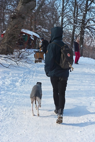 Winter at Normafa- Practicing for the dog orienteering event