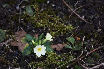 Winter flowers near Kirche am Steinhof