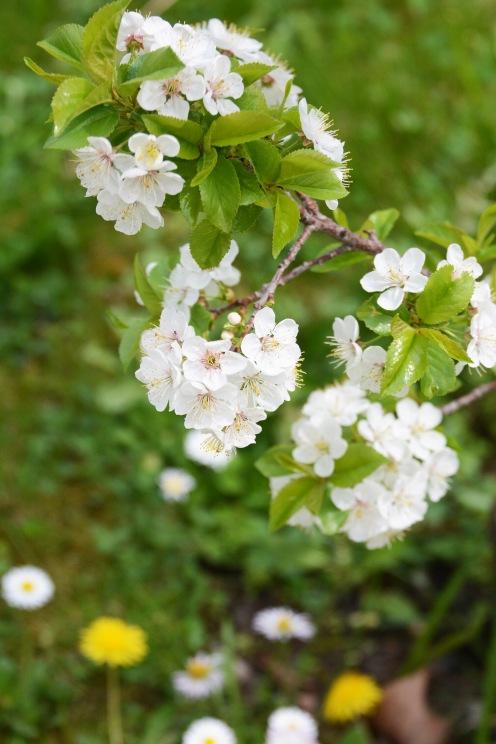 Spring in the ELTE Botanical Garden (Füvészkert)