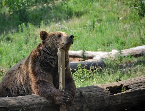 Budakeszi Wildlife Park