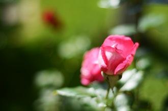 Summer in our garden