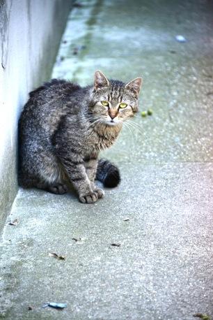 Compulsory garden city cat