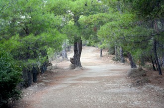 On the road to the Altar of Zeus
