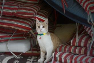 Restaurant cat is alert