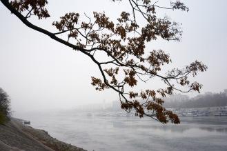 Morning mist along the Danube