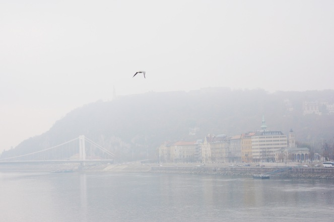 Morning mist along the Danube