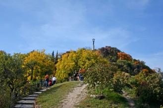 Desire path on Gellért hill