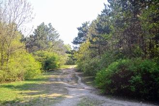Desire path in Halmi-forest