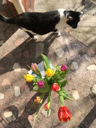 Tulips+CAT