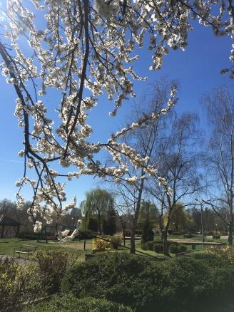Arad in bloom