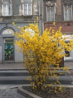 Király street in spring bloom