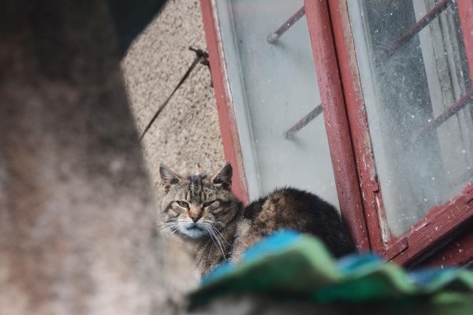 Disgruntled Sarajevan cat