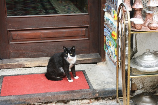 Cat on Kazandžiluk street, Sarajevo