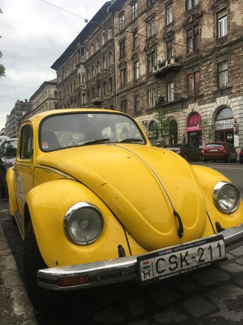 A yellow Terézváros beetle
