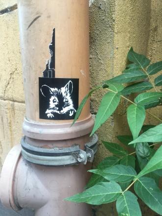 Street rodent