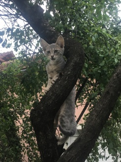 Desperate neighbourhood kitten