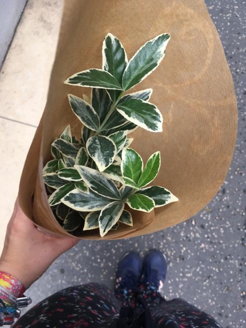 New plant to (not) kill